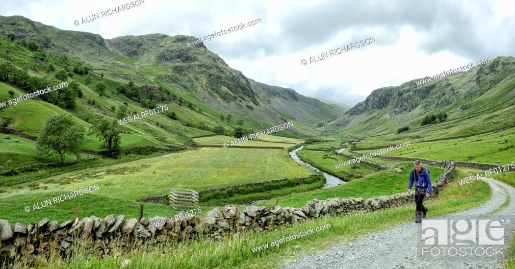 Stock Photo: UK, Lake District, Longsleddale valley, mature man walking on field path in rural landscape.