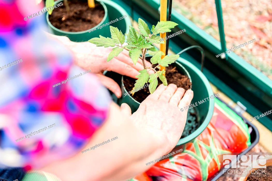 Stock Photo: Close-up of man planting seedling.