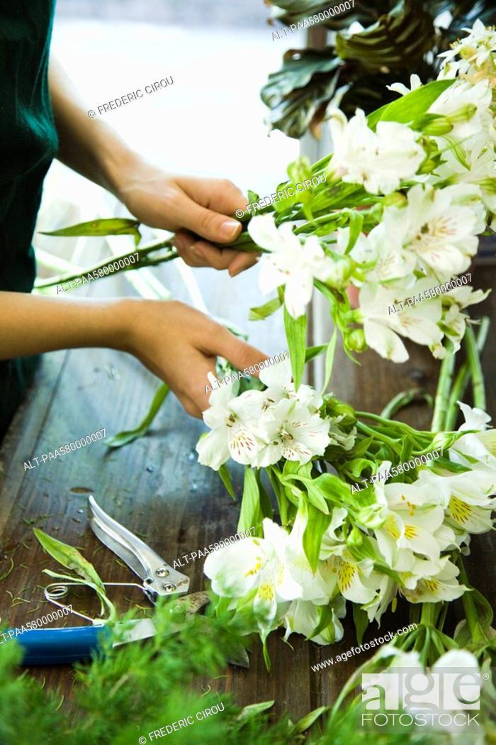 Stock Photo: Arranging flowers.