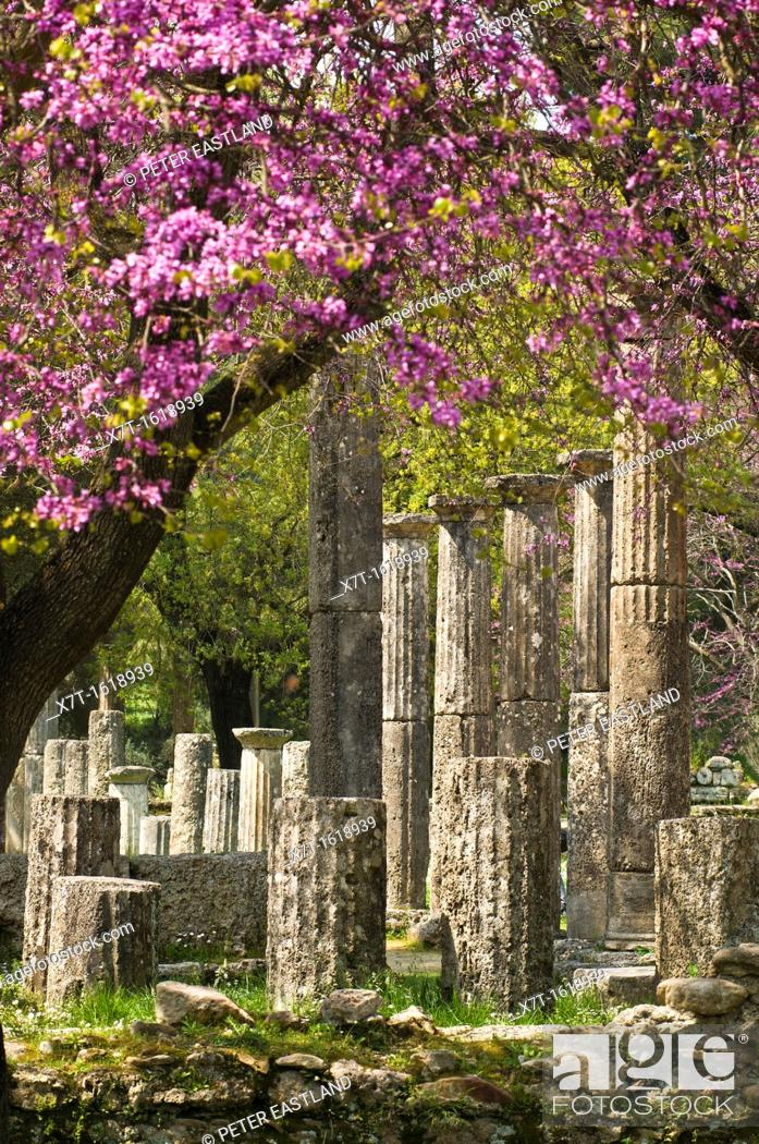 Imagen: Springtime with the judas trees in bloom, looking towards the palaestra, at ancient Olympia, Peloponnese, Greece.