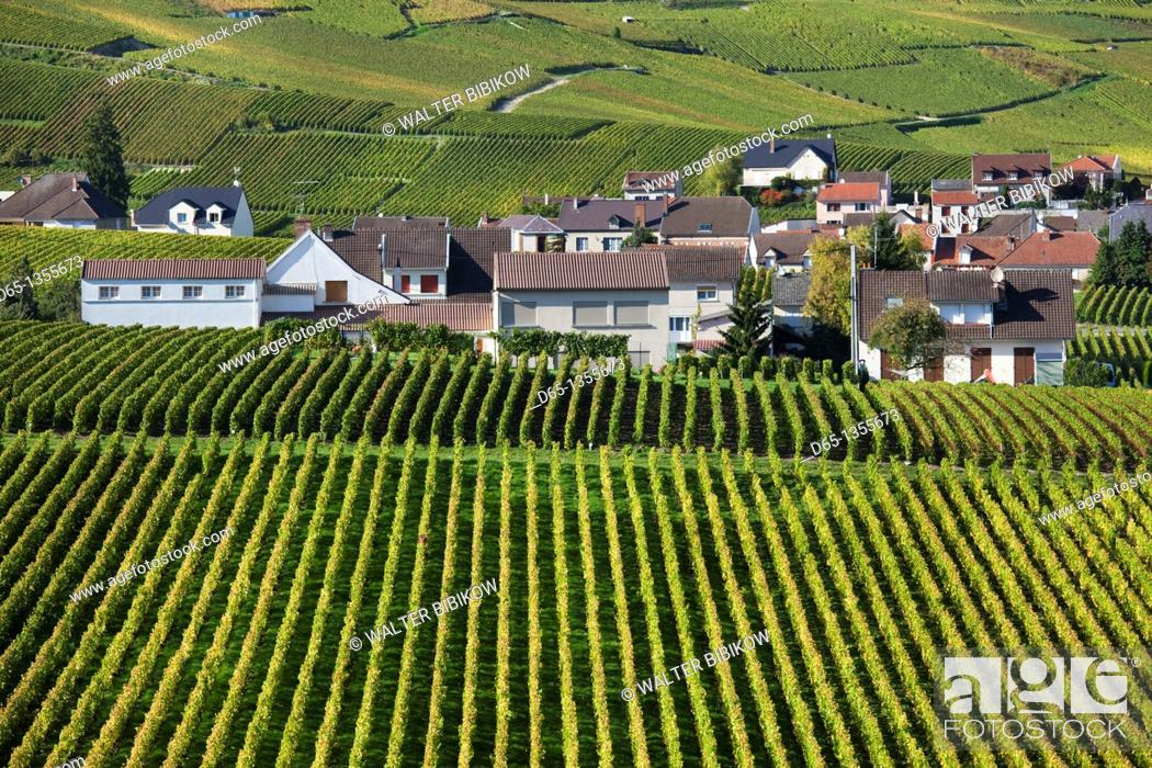 Stock Photo: France, Marne, Champagne Region, Oger, town and vineyards, autumn.