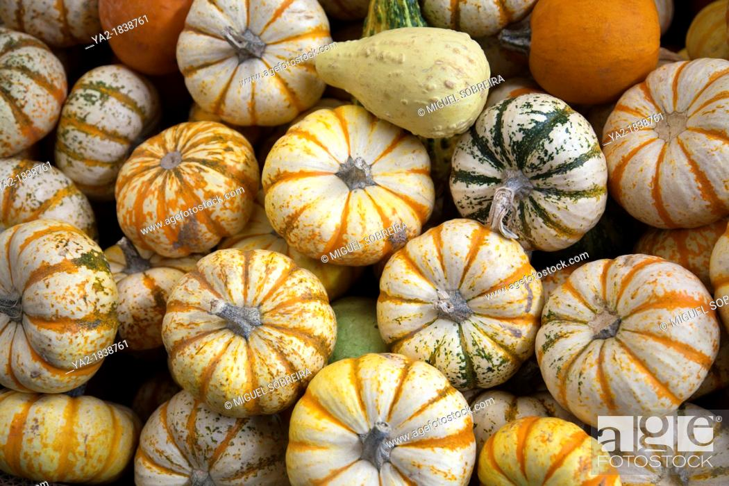 Stock Photo: Pumpkin and Squah Varieties at Jamaica Market - Mexico City DF.