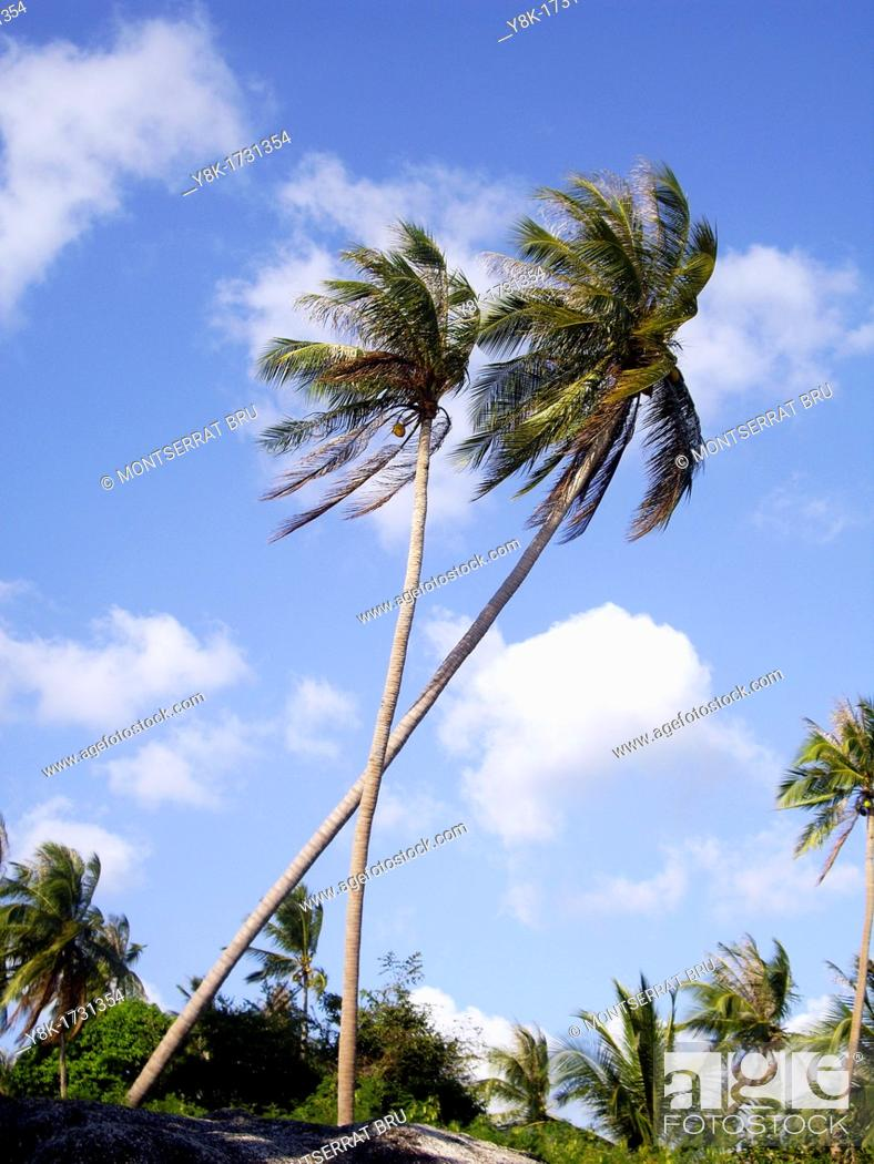 Stock Photo: Two palmtrees against deep blue sky with some white clouds in Koh Phangan, Thailand.