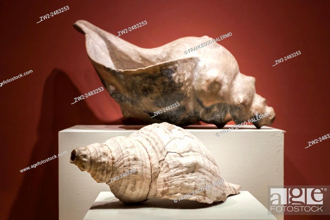 Photo de stock: Big prehistoric conch on coloured background. Guadalajara, Jalisco. Mexico.