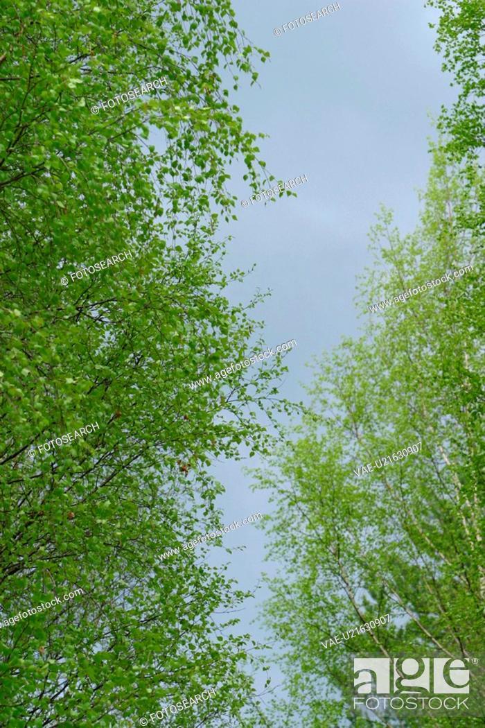 Stock Photo: natural, seasonal, scenic, calm, serene, placid.