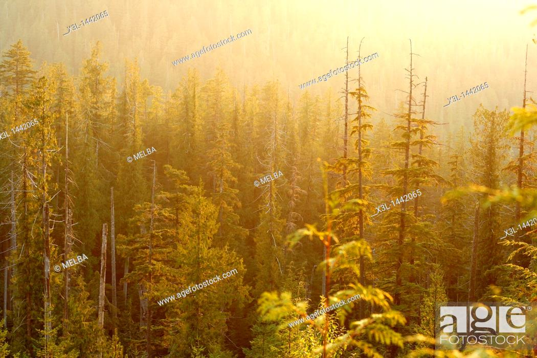 Stock Photo: Tiupana inlet  Nootka Sound  Vancouver island  British Columbia  Canada.