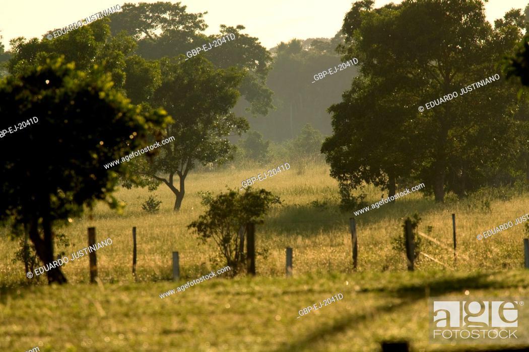 Stock Photo: Field to the Dawn, Corumbá, Mato Grosso do Sul, Brazil.