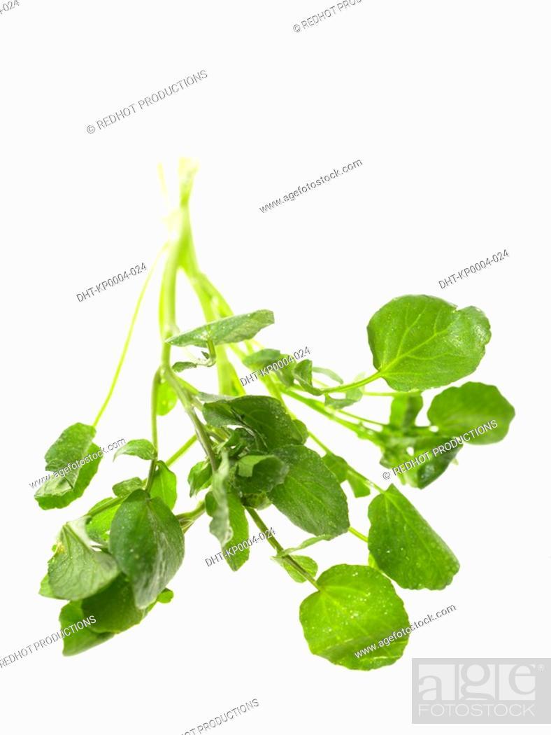 Stock Photo: Raw Food, Herbs, Watercress.
