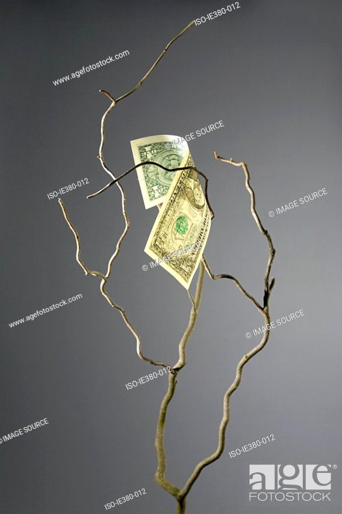 Stock Photo: One dollar bill on a branch.