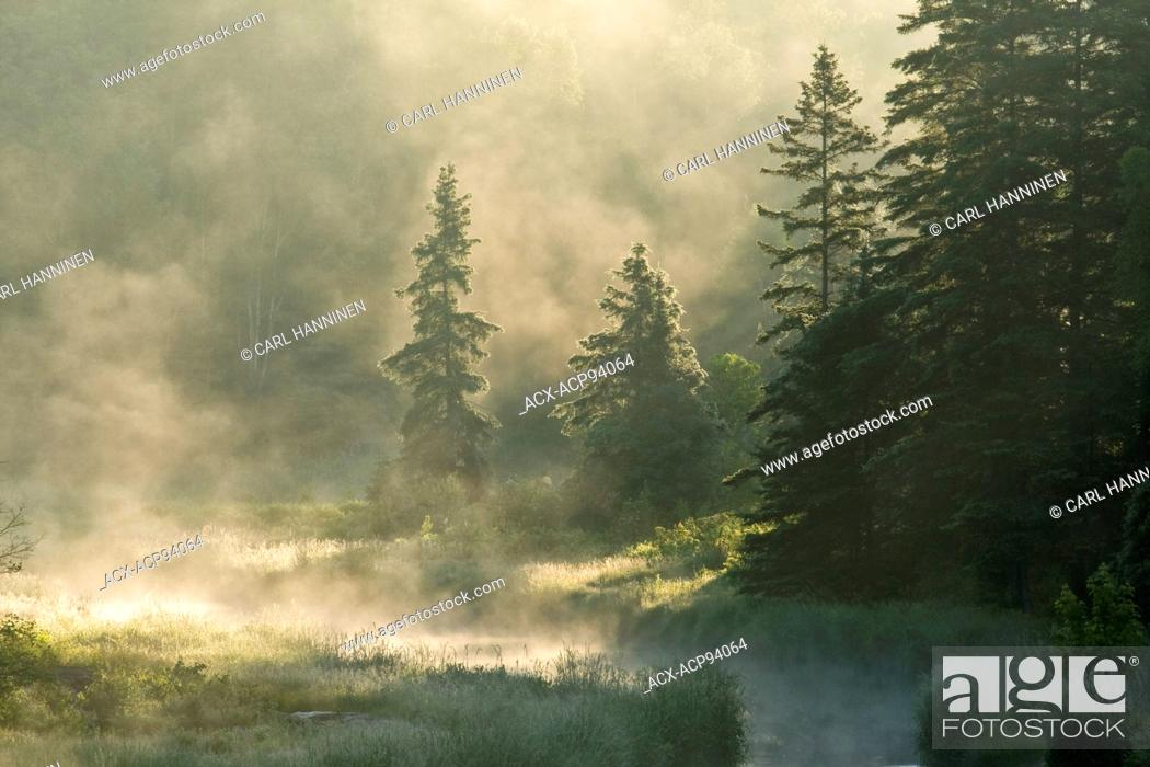 Stock Photo: Foggy summer morning, Junction Creek, Lively, Ontario, Canada.