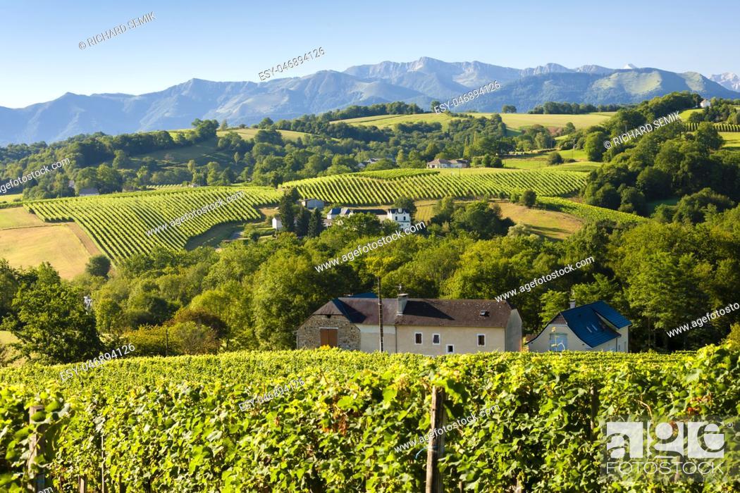 Imagen: vineyard, Jurancon, France.