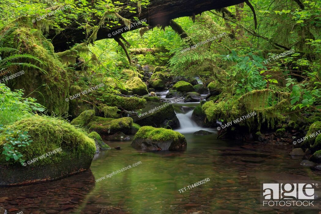 Stock Photo: Steam and green forest.