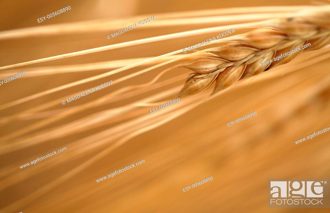 Stock Photo: Corn detail with copy space.