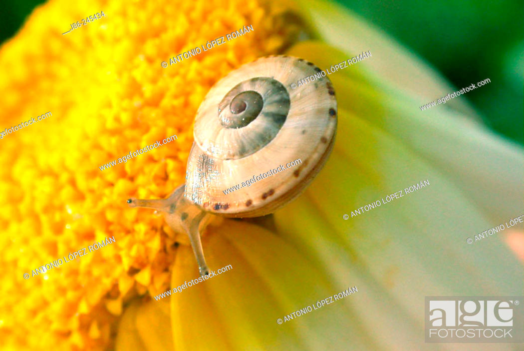 Stock Photo: Snail.