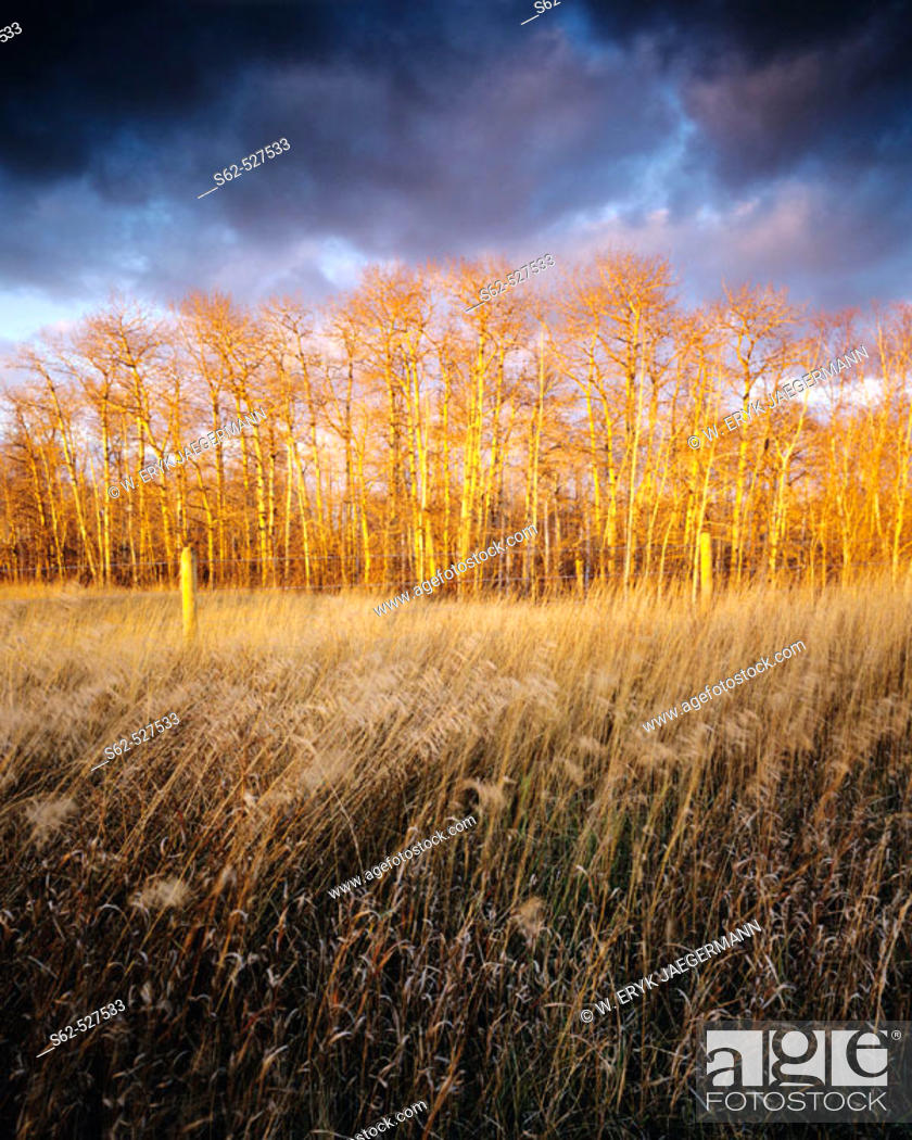 Stock Photo: Fence and Trees with Dramatic Sky at Sunset in Late Fall near Edmonton, Alberta, Canada.