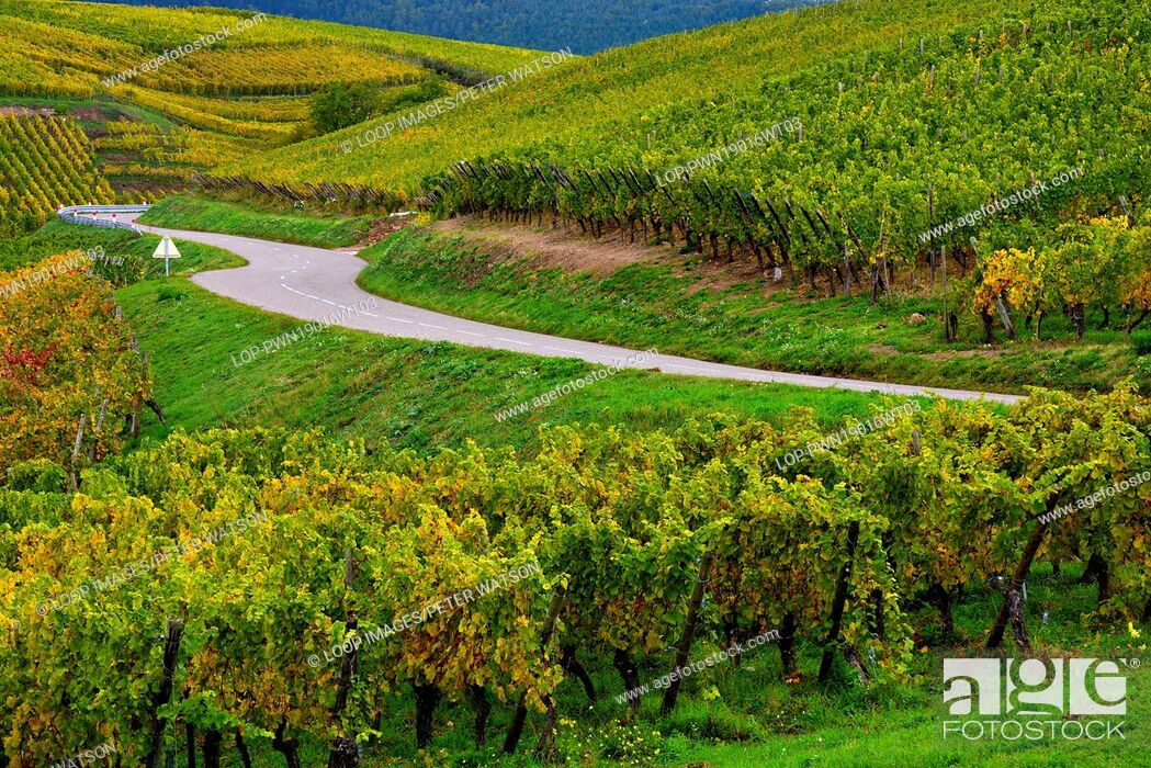 Imagen: An autumn view of Alsace vineyards after the grapes have been harvested.