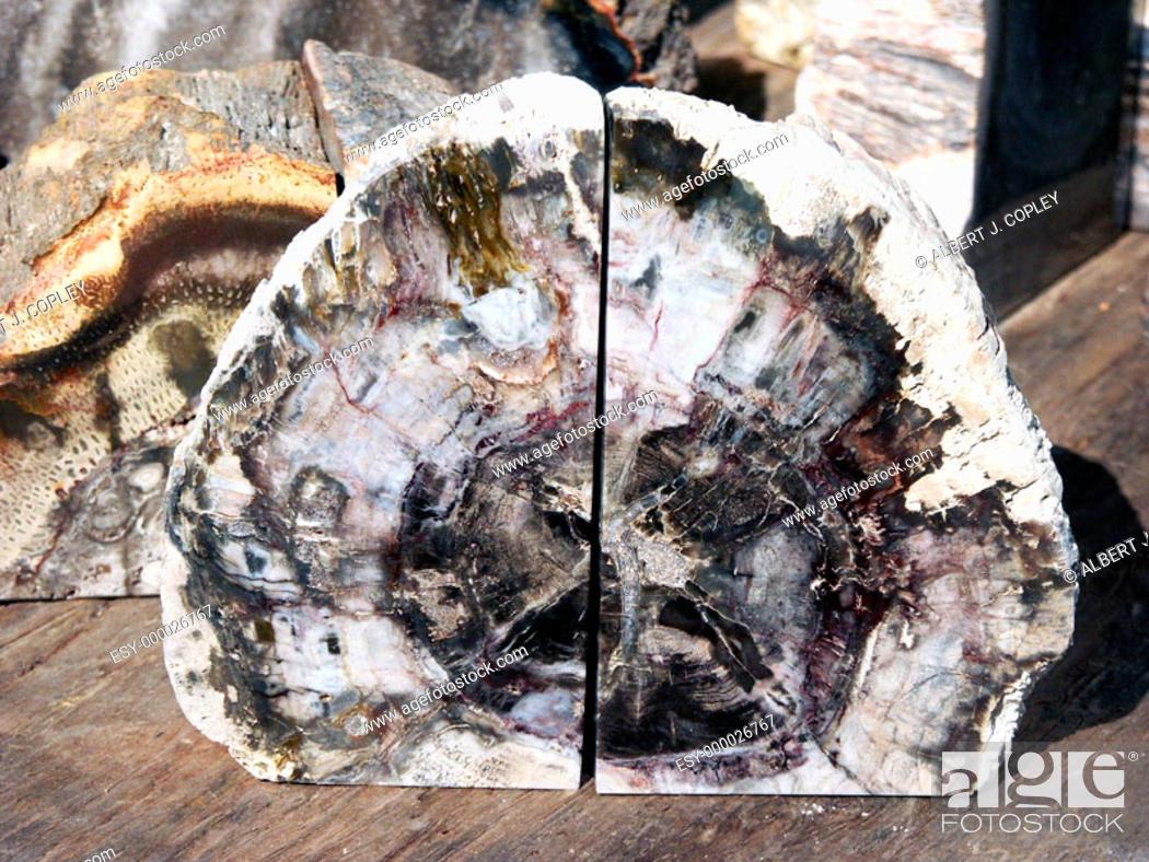 Stock Photo: Petrified wood bookend.