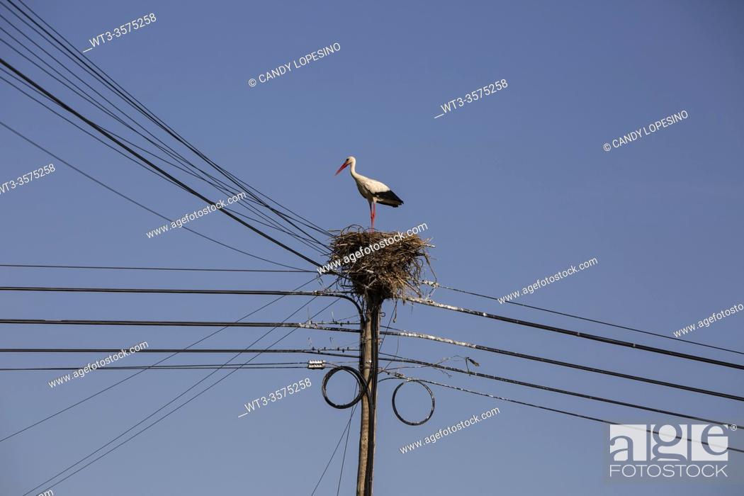 Stock Photo: Stork in the nest, power line, Aveiro Ria, AVEIRO, MURTOSA, BEIRA, . PORTUGAL, EUROPE.