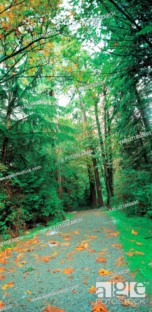 Stock Photo: scene, natural, leaf, forest, tree, mountain.