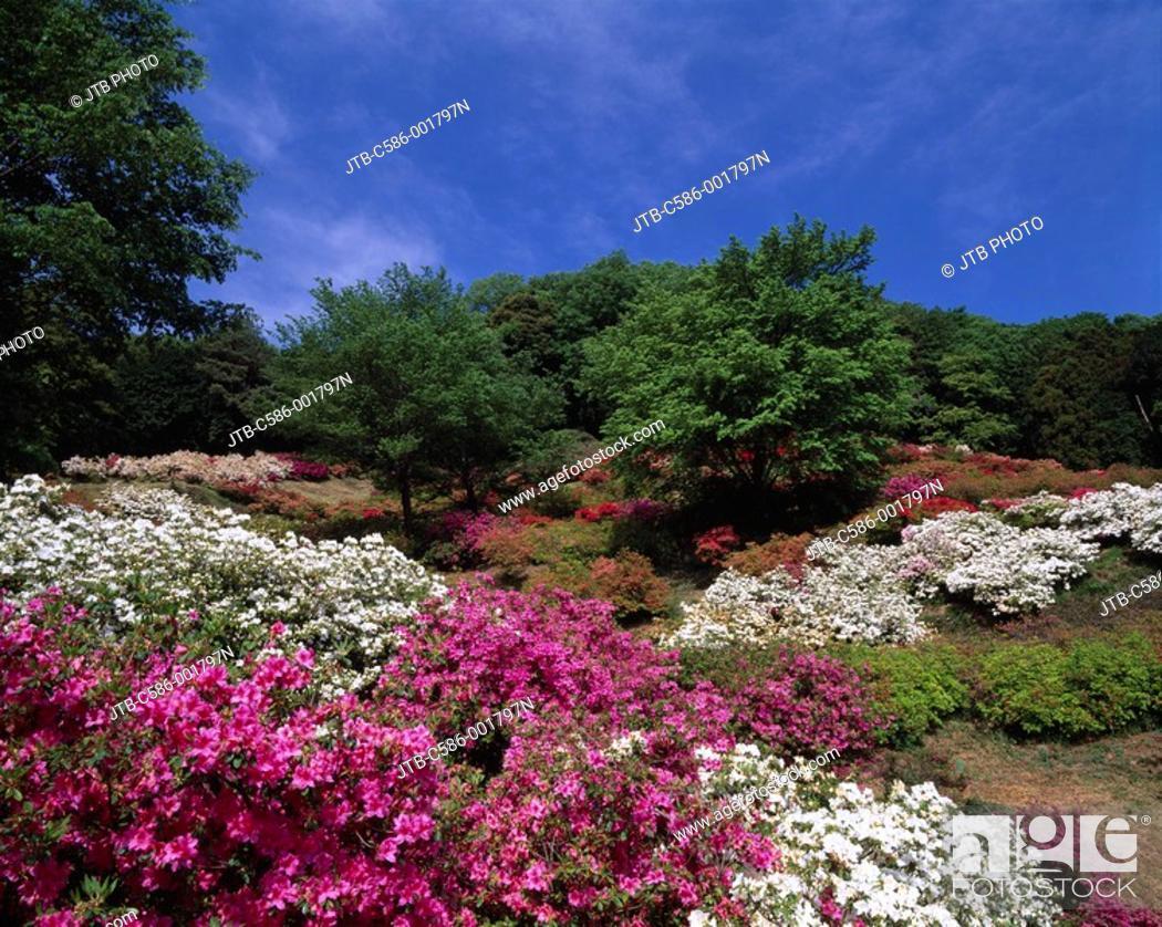 Stock Photo: Godaison Azalea Ogose Saitama Japan Red White Blue sky Clouds.