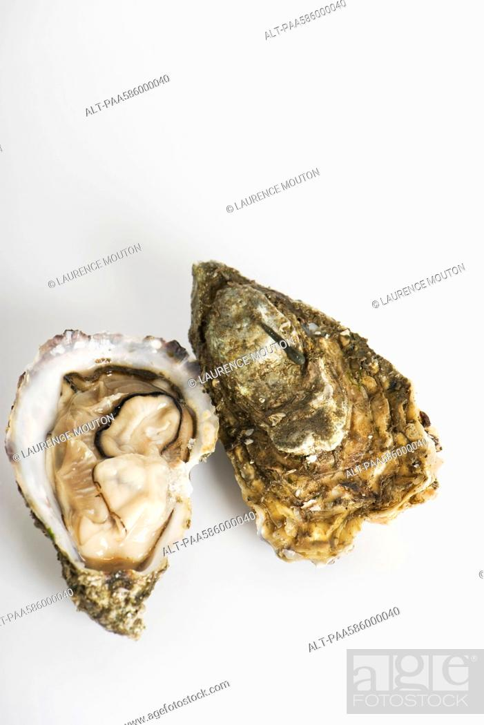 Stock Photo: Fresh raw oysters.
