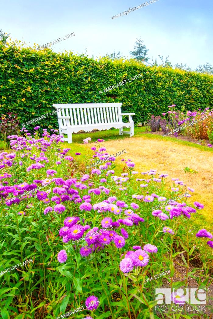Miraculous Beautiful Summer Garden With White Bench And Violet Flowers Ncnpc Chair Design For Home Ncnpcorg