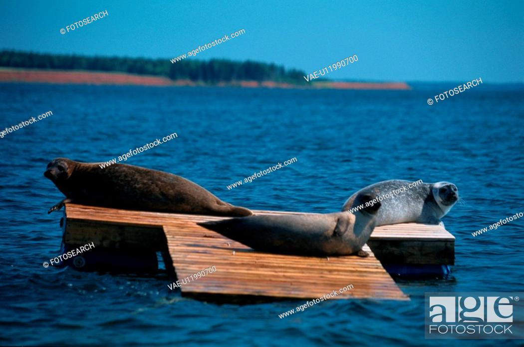 Stock Photo: Three Seals On Platform.