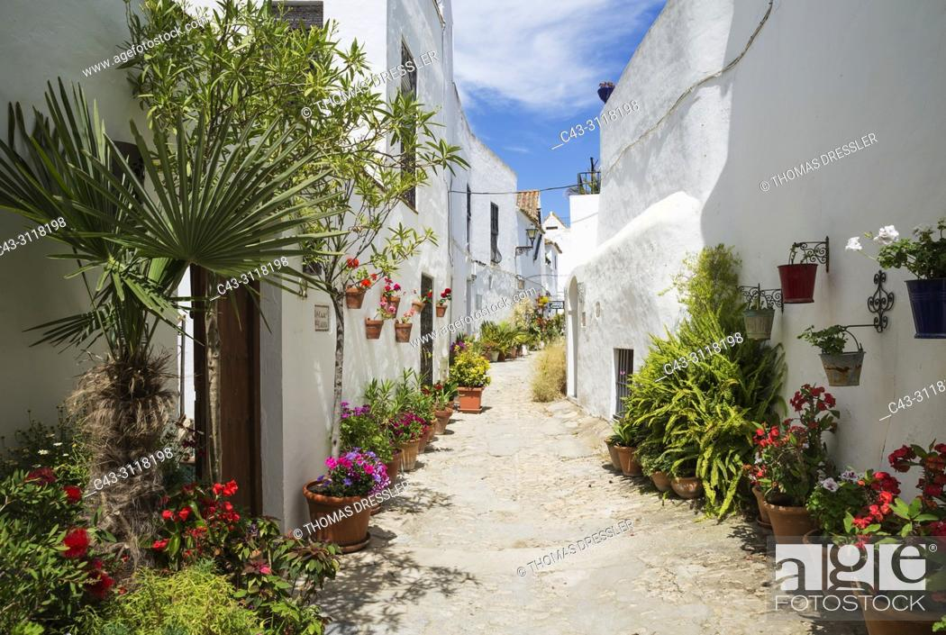 Stock Photo: Beautiful alleyway with flowerpots and brillianty whitewashed houses in the hilltop town of Vejer de la Frontera. Cadiz province, Andalusia, Spain.