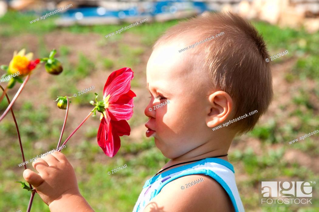 Stock Photo: little boy smells flower of a dahlia.