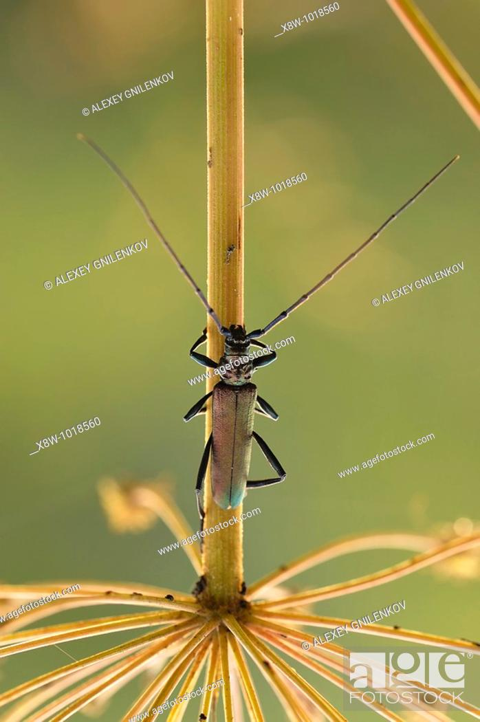Stock Photo: Insect macro, Russia, Moscow Region.