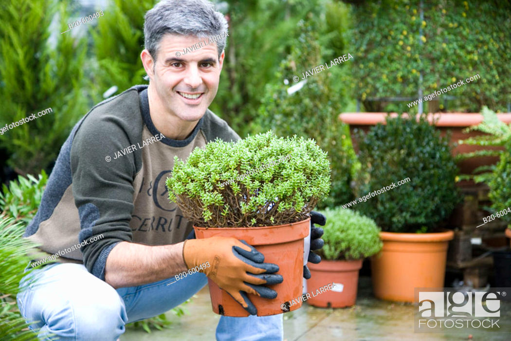 Stock Photo: Gardener transplanting flower pots. Garden, Tree nursery. Gipuzkoa, Euskadi. Spain.