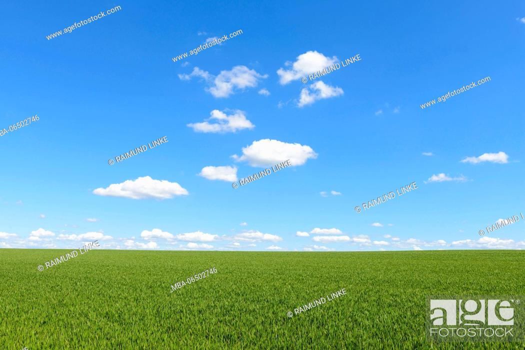 Stock Photo: Grainfield with sky and clouds, Spring, Baden-Wurttemberg, Germany.