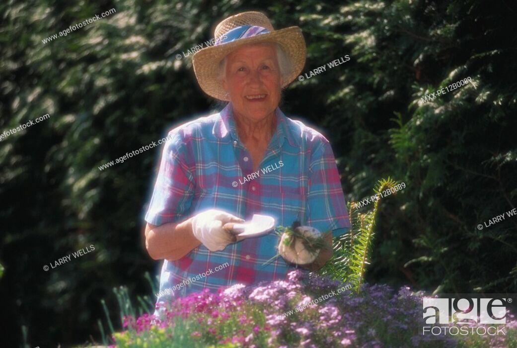 Stock Photo: senior woman gardening.