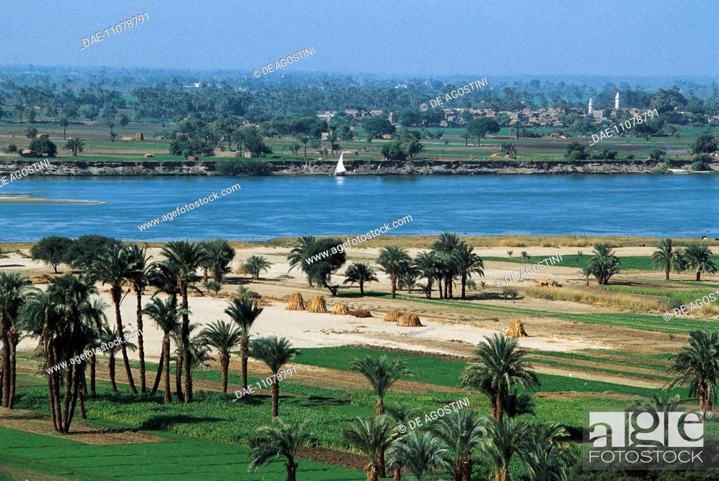 Stock Photo: Palm trees on the Nile river, Minieh region, Egypt.