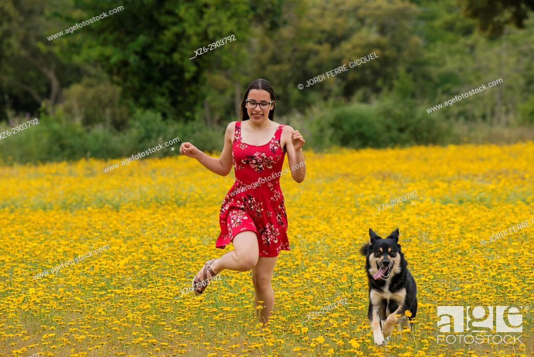 Stock Photo: Girl with a red dress running with a dog in a yellow field.