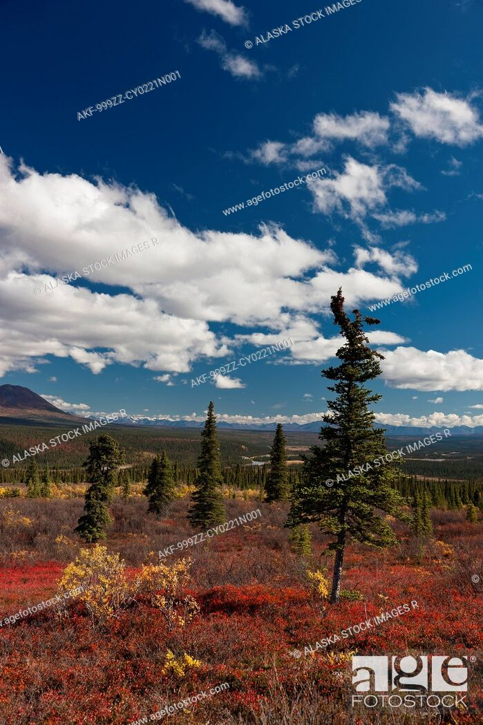Stock Photo: Scenic view of colorful tundra and distant view of the Alaska Range from the Denali Highway, Interior Alaska, Autumn.