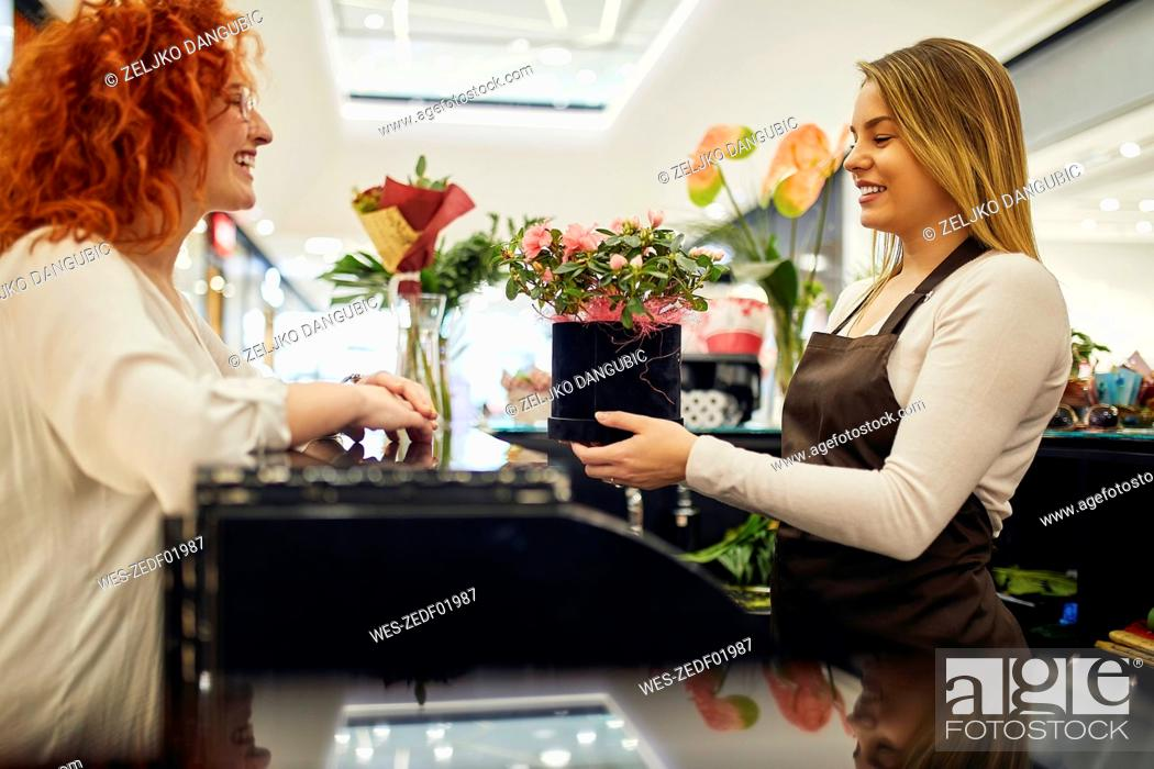 Stock Photo: Happy customer and shop assistant with potted plant at counter in flower shop.