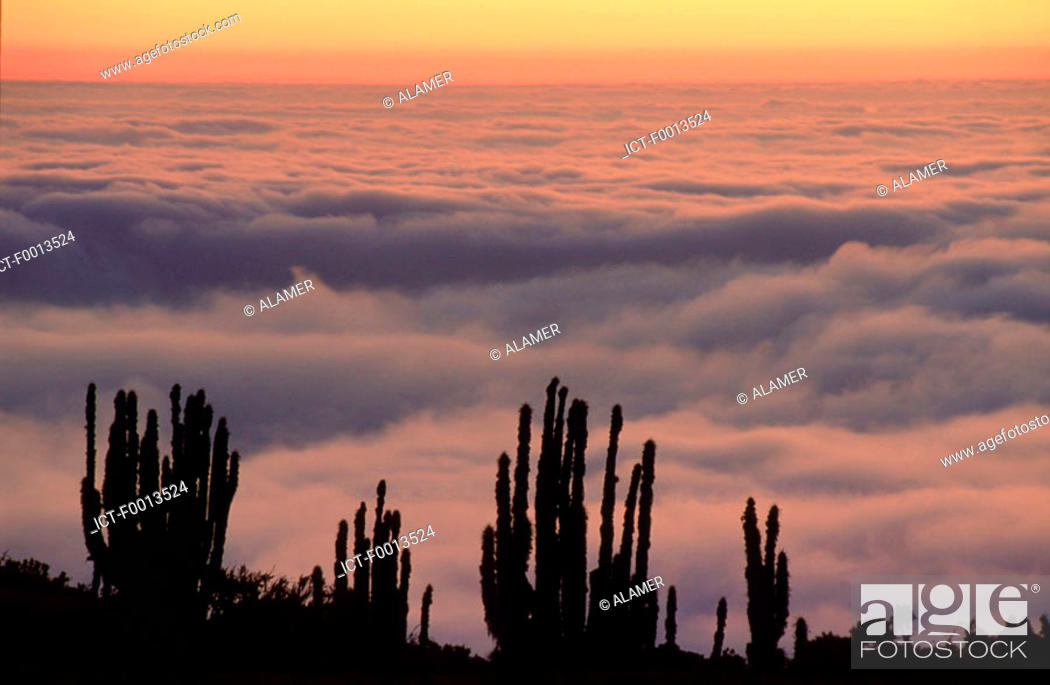 Stock Photo: Chile, Pan de Azucar national park, 'camanchaca', coastal mist.