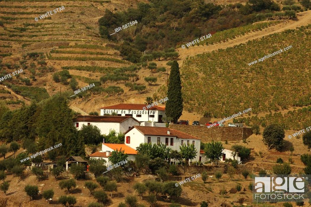 Stock Photo: Winegrowing in the Vale Mendiz, production of red wine and port on the Quinta do Passadouro, Pinhao, Douro Region, North Portugal, Europe.
