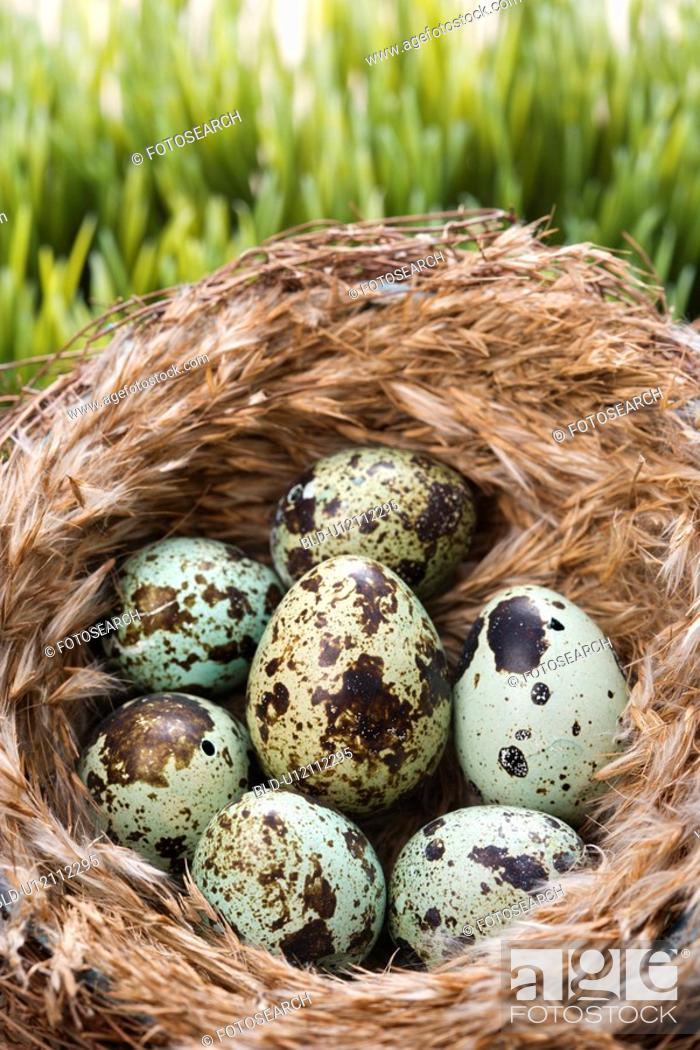 Stock Photo: Still life of speckled eggs in nest.