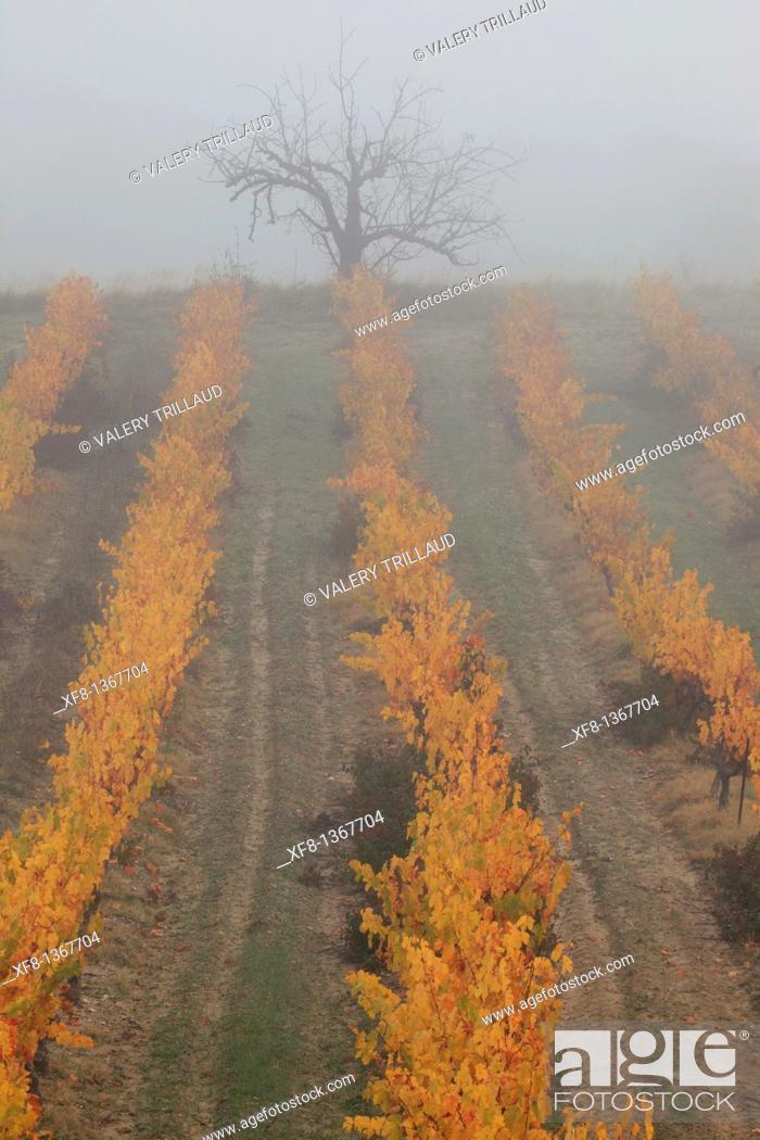 Stock Photo: Autumnal vineyards of the Luberon, Vaucluse, Provence-Alpes-Côte d'Azur, France.