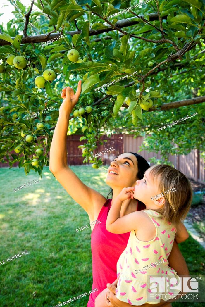 Stock Photo: Mother and daughter in garden, looking at apples on tree.