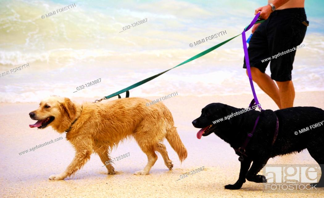 Stock Photo: Two dogs on leashes at beach.