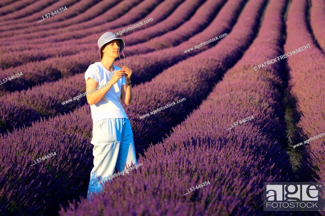 Stock Photo: Lavender (Lavandula angustifolia), women standing in filed of Lavender, enjoying scent of Lavender, Vaucluse, Provence, France.