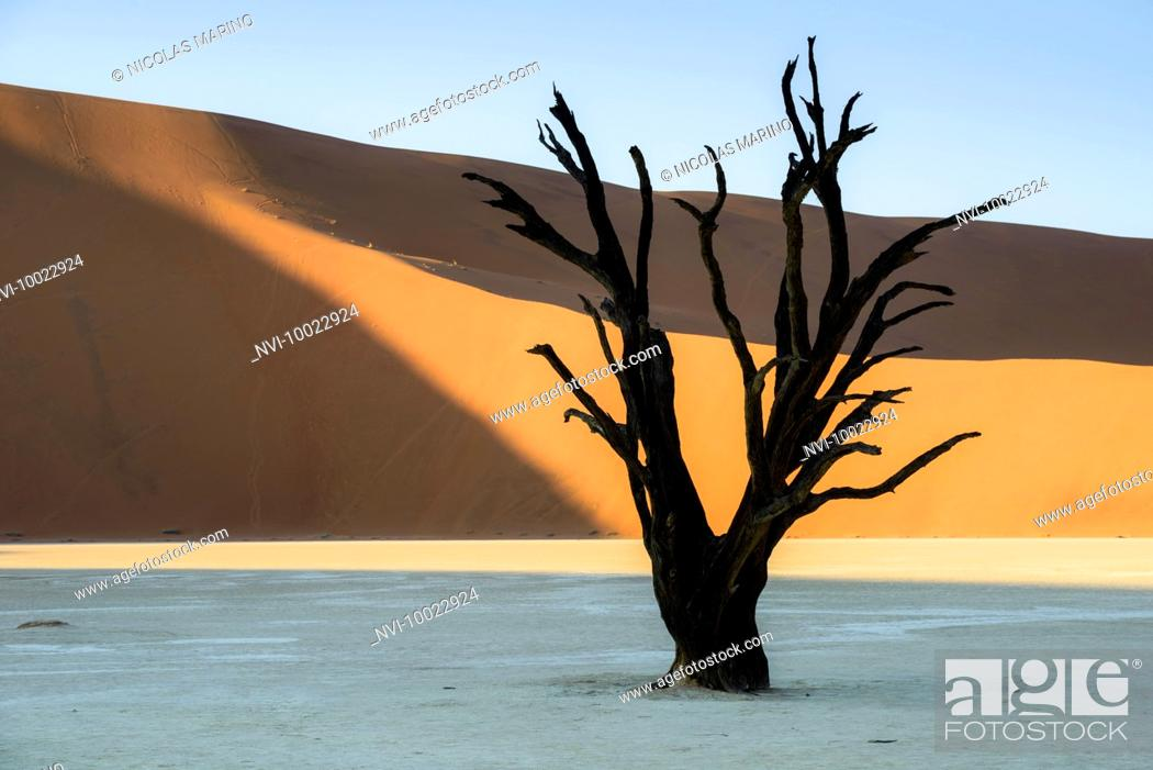 Stock Photo: The red dunes of Sossusvlei and the dead trees of Deadvlei, Namibia.