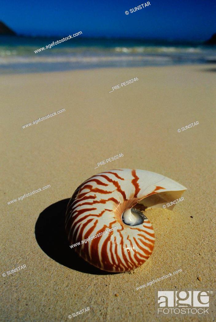 Close Up Of Nautilus Shell Nautilus Pompilius Lying On Tropical