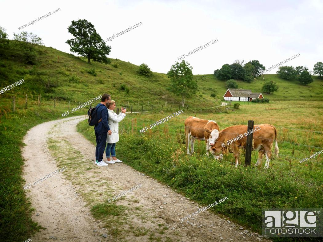 Imagen: Couple looking at cows on pasture.