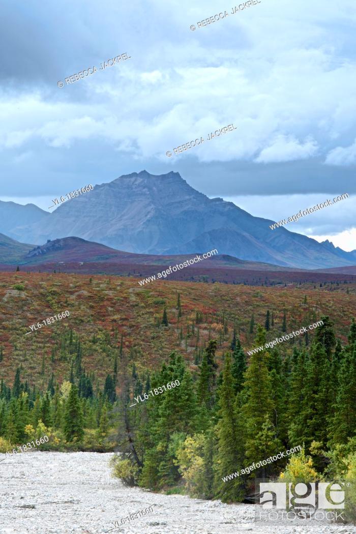 Stock Photo: Denali National Park, Alaska shows off its fall colors.