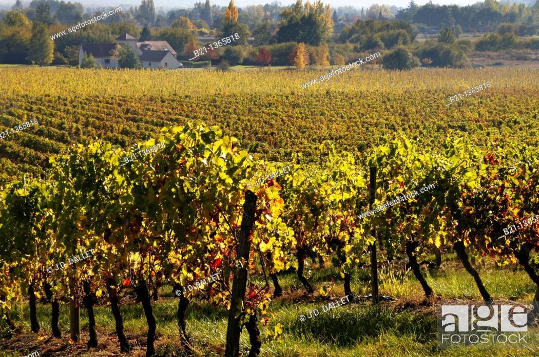 Stock Photo: France, Aquitaine, Dordogne, Bergerac AOC wine area, near Le Fleix.