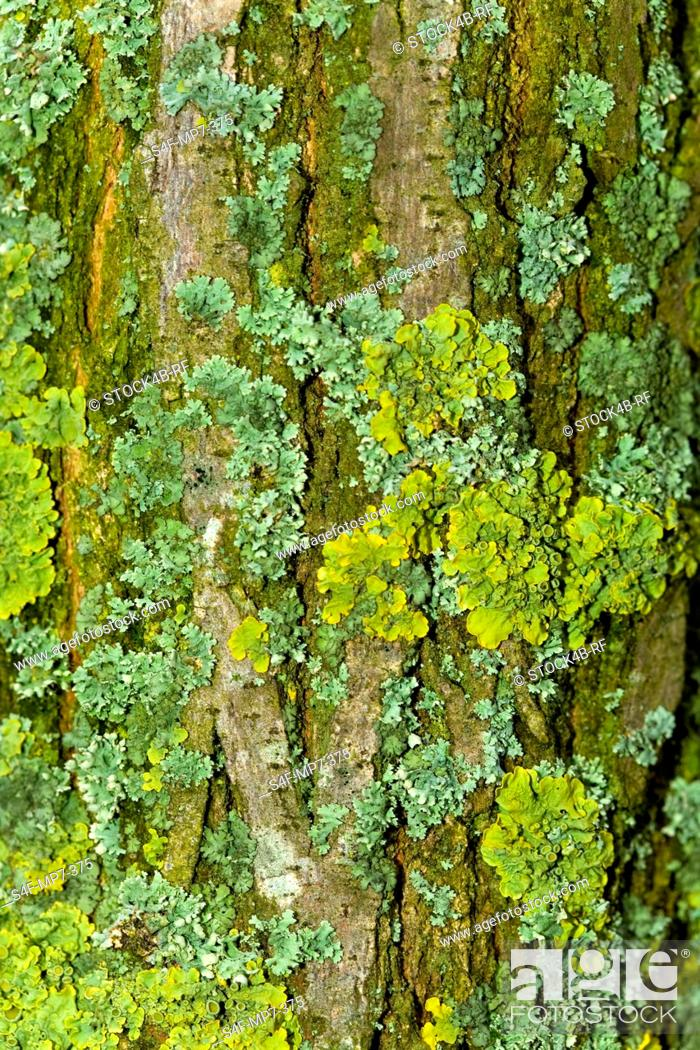 Stock Photo: Bark of a tree overgrown with moss.